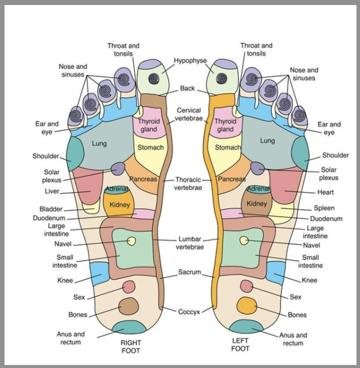 Diagram of foot massage areas and pressure points